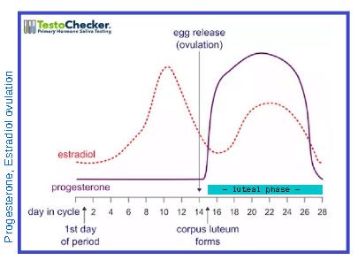 Fertility hormones progesterone, estradiol ovulation chart
