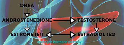 Fitness hormone testing Australia